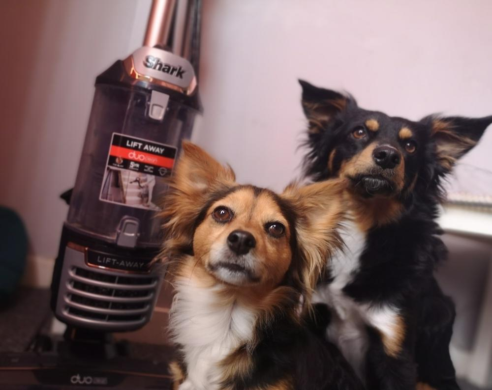 Our Guide to Finding The Best Hoover For Dog Hair