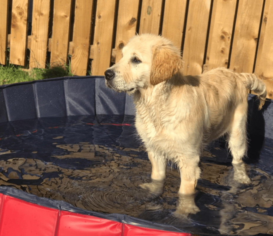 Paddling pool to cool down your dog