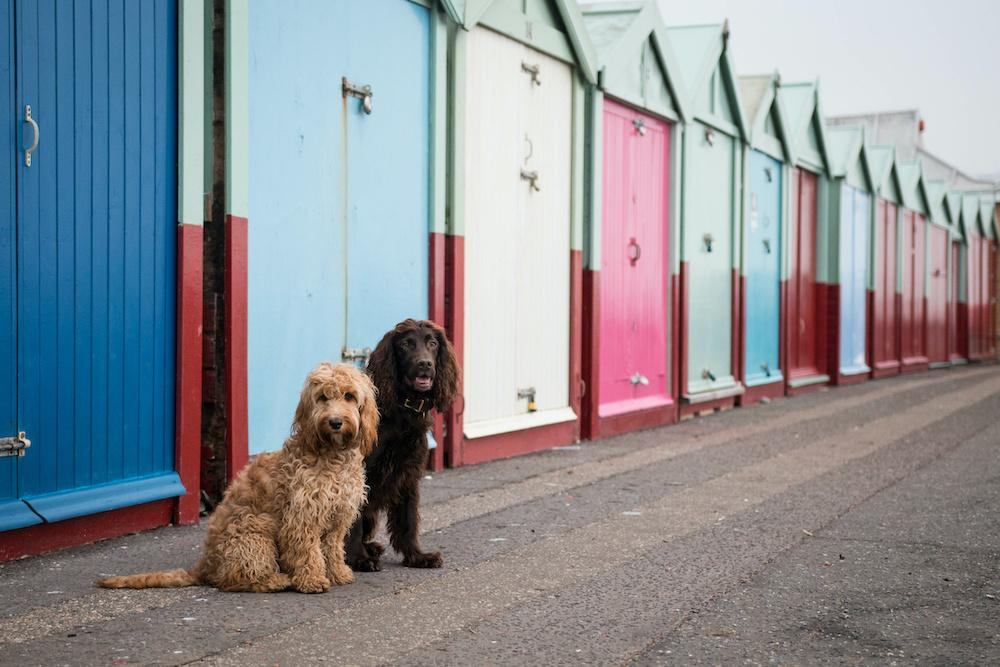 11 of the UK's Best Dog Friendly Hotels By The Sea