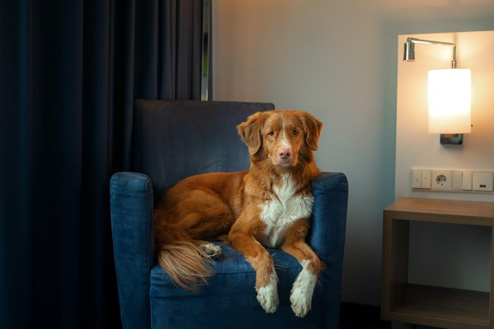 dog friendly hotels by the sea