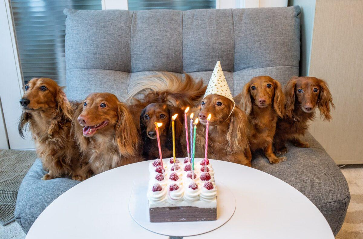 15 Tail-Wagging Items to Celebrate Your Dog's Birthday