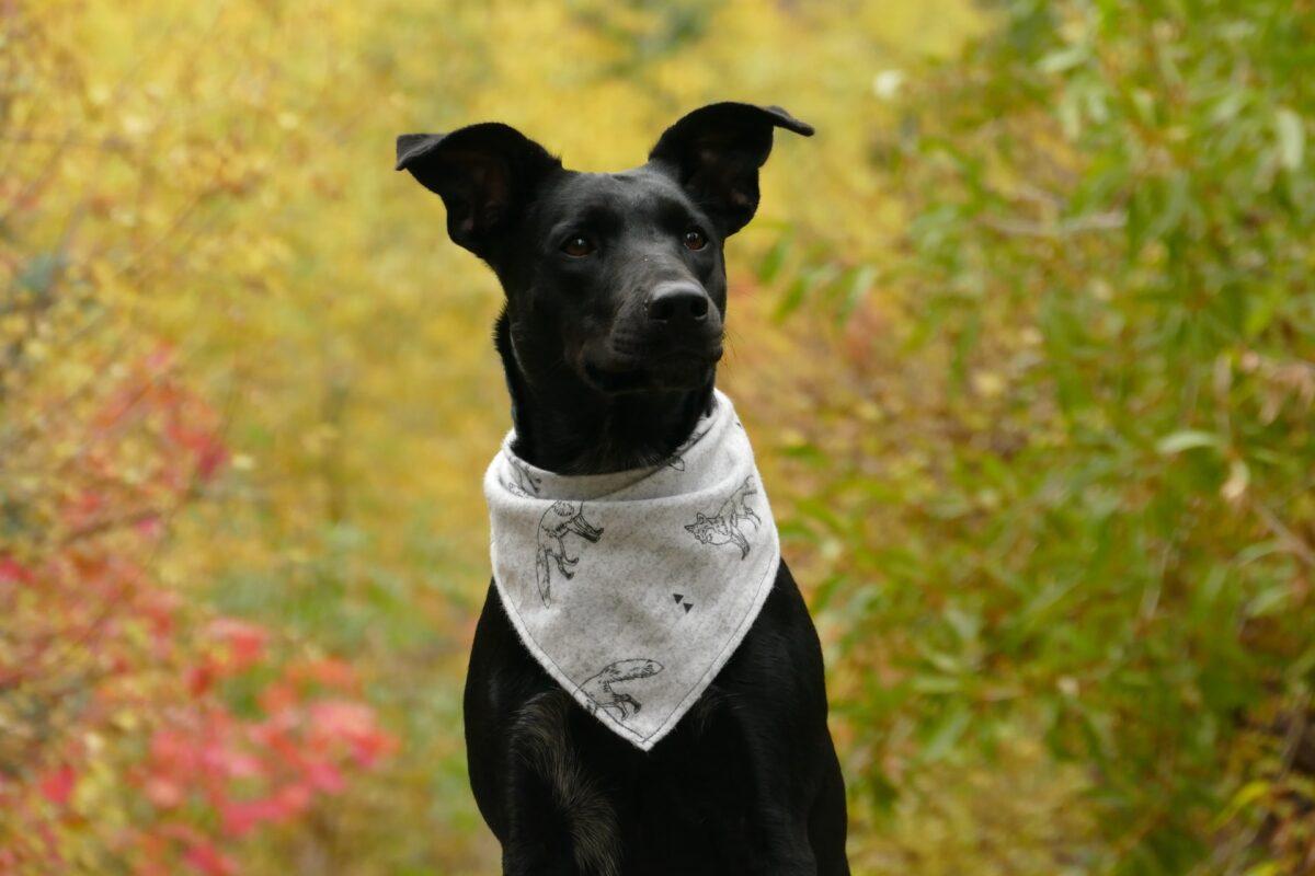 15 Summer Dog Bandanas For Your Dapper Hound