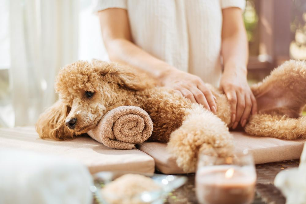How to Give Your Pooch a Dog Massage