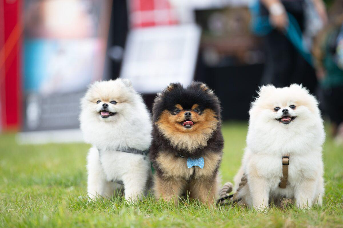 Dogstival is All Paws GO This September