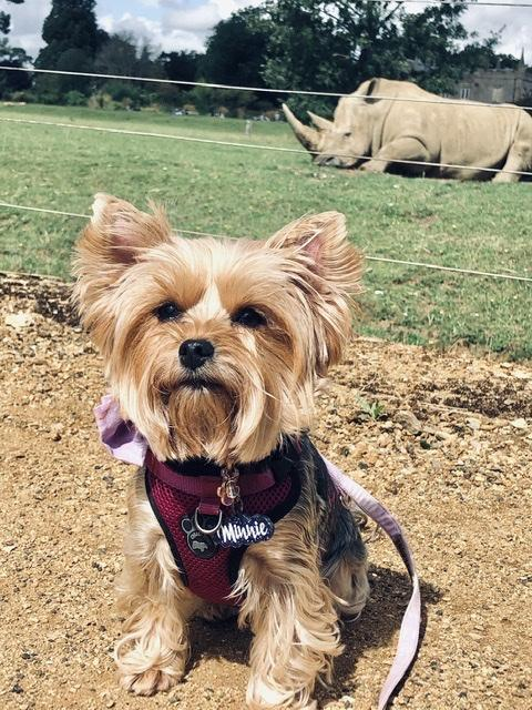 Doggy Day Out At Dog Friendly Cotswolds Wildlife Park