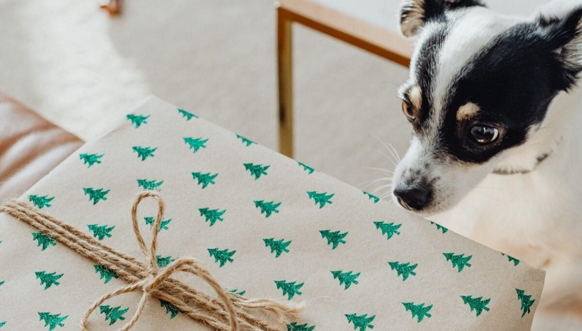 Christmas Gift Guide By Dog Lovers for Dog Lovers