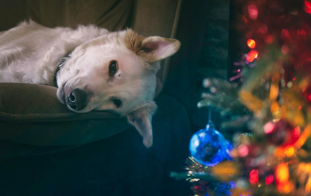 Deck The Halls With These 12 Dog Christmas Decorations
