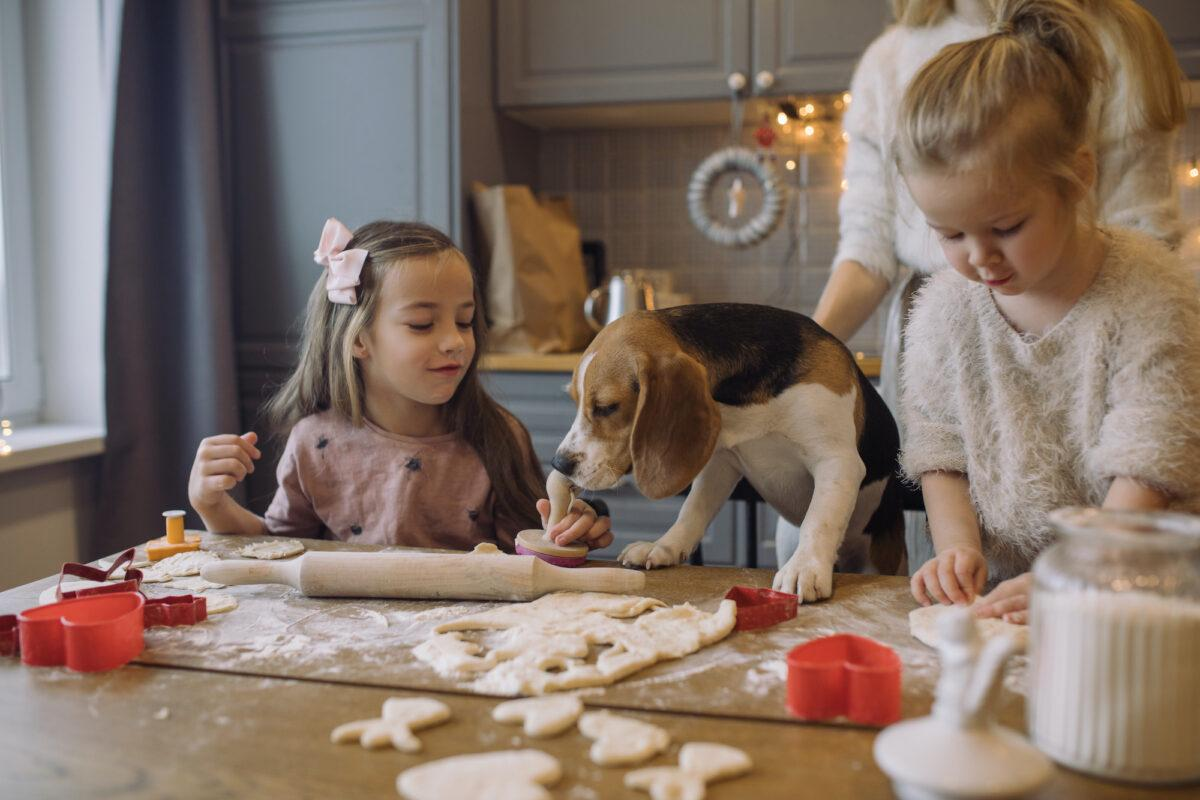Great Doggy Bake Off Launched To Keep Dog Owners Occupied During Lockdown